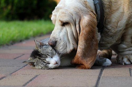 Фото Пес нюхает кошку, лежащую на тротуаре, фотограф Szilvia Pap-Kutasi