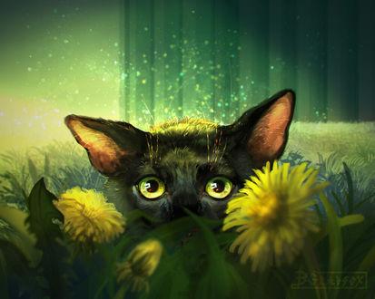 Фото Черная кошка за одуванчиками, by Grayfox Windmill