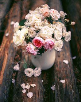 Фото Розы в вазе на бревне, by Татьяна Миронова - mironovatanyahoo