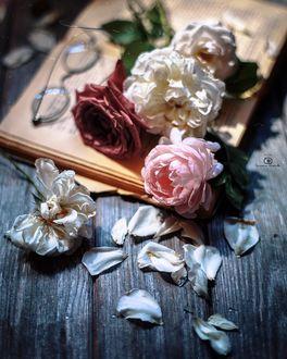 Фото Розы и очки на журнале и на дощатой поверхности, by Татьяна Миронова - mironovatanyahoo