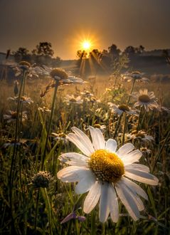 Фото Комашки в каплях росы на рассвете