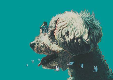 Фото Девушка сидит на голове собаки