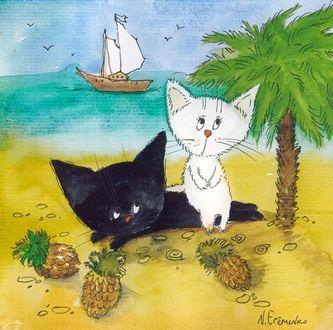 Фото Котята- черный и белый на пляже, by Анастасия Еременко