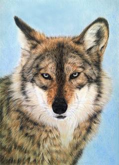 Фото Портрет волка, by BeckyKidus