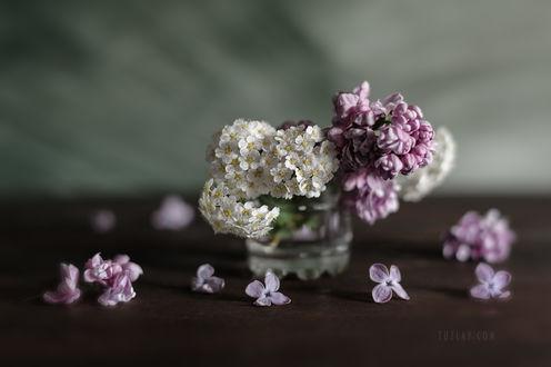 Фото Цветы спиреи и сирень. Фотограф Владимир Тузлай