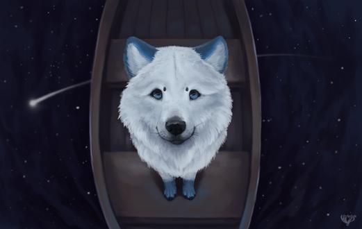 Фото Белый волк в лодке под ночным небом, by Himmis