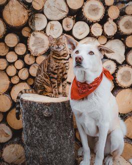 Фото Пес и кошка рядом на пне, by sukiicat