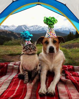 Фото Кошка и собака в праздничных колпаках лежат на покрывале в палатке, by Henrythecoloradodog