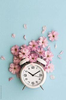 Фото Будильник и розовые цветы над ним