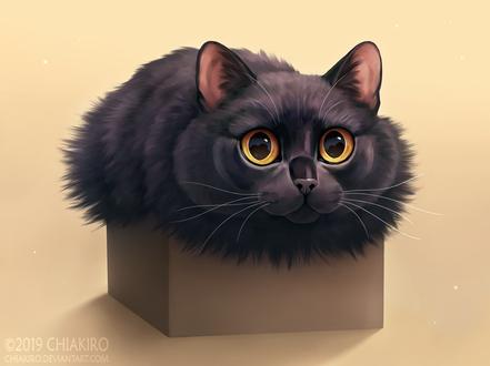 Фото Кошка лежит на коробке, by Chiakiro