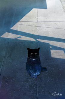 Фото Кошка сидит на дороге