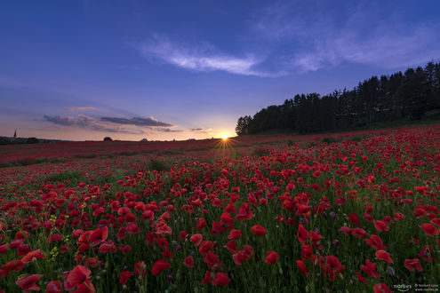 Фото Заход солнца над маковым полем, by Norbert Liesz