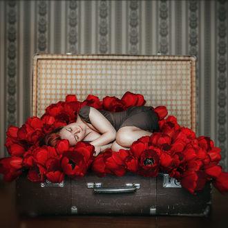 Фото Девушка лежит в чемодане с красными тюльпанами, by Maryna Khomenko