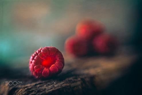 Фото Ягода малины крупным планом, фотограф Rosana Zanetti Fait