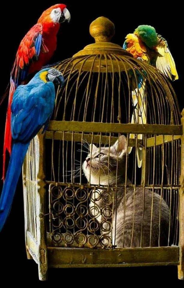 сказки старого попугая фото качестве верхней одежды