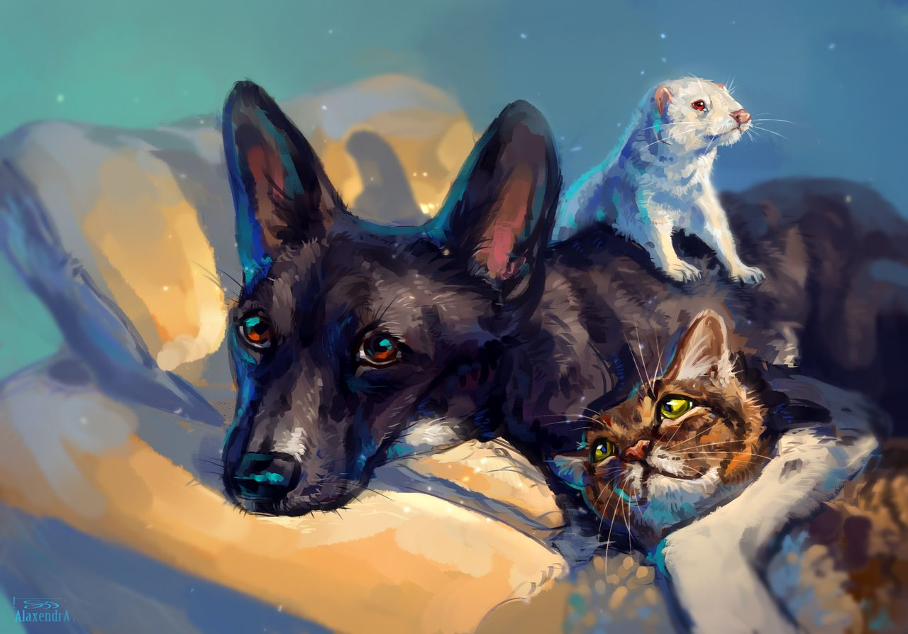 Фото Собака, кошка и хорек на кровати, by AlaxendrA