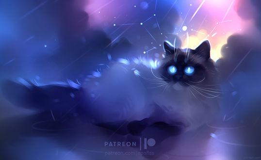 Фото Кошка под дождем на фоне созвездий, by Apofiss