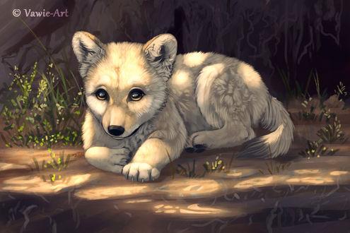 Фото Волчонок лежит на земле, BY Vawie-Art