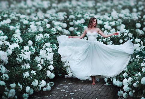Фото Девушка в длинном белом платье стоит в окружении белых пионов. Фотограф Светлана Беляева