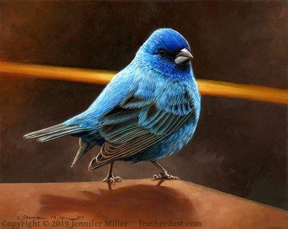 Фото Голубая птица, by Nambroth