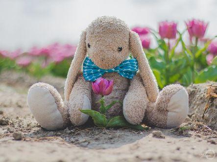 Фото Игрушечный заяц с тюльпаном, by Yuukon
