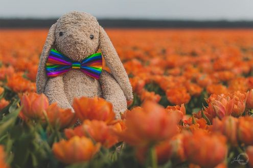 Фото Игрушечный заяц в тюльпанах, by Yuukon