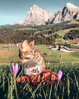 Фото Кошка и ежик на поле с крокусами, by mr. pokee