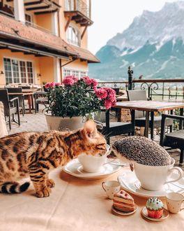 Фото Кошка и ежик на столике в кафе, by mr. pokee