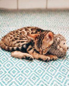 Фото Котенок спит с плюшевой игрушкой ежика, by mr. pokee