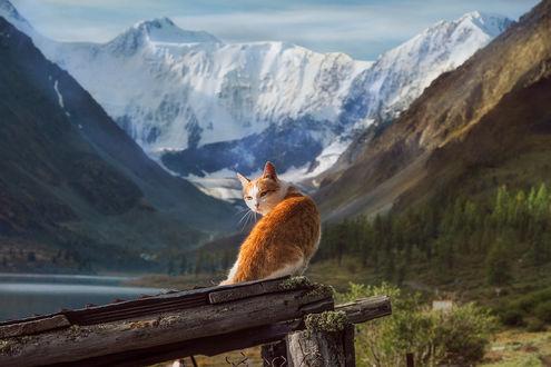 Фото Рыжий кот сидит на старом поваленном заборе. Фотограф Тамара Андреева