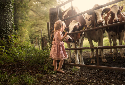 Фото Девочка стоит у загона с коровами, by Jessica Drossin
