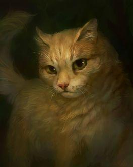 Фото Рыжий кот, by Romashik-arts