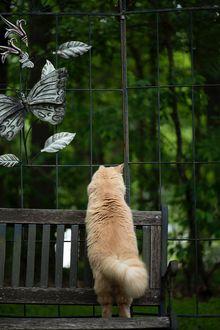Фото Пушистая кошка стоит на задних лапках на лавочке, фотограф Erda Estremera