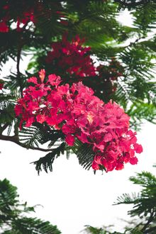 Фото Цветущая ветка дерева