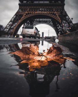 Фото Осенний листик лежит в луже на дороге, Париж, фотограф Imzefyr