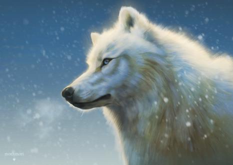 Фото Белый волк под падающим снегом, by mothmori