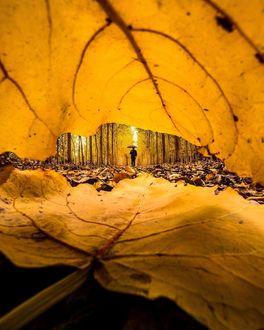 Фото Человек с зонтом виден в конце осенней аллеи