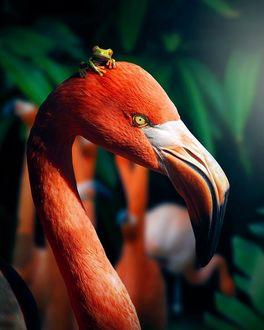 Фото На голове фламинго сидит лягушка, by Zenja Gammer