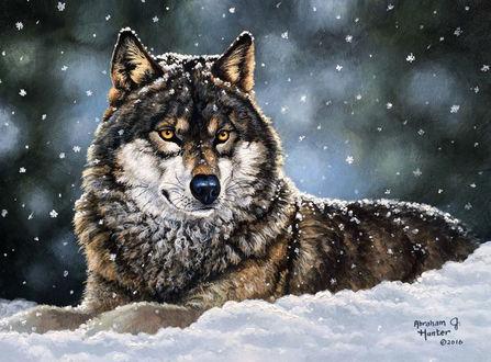 Фото Волк на снегу под снегопадом, Художник Abraham Hunter