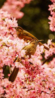 Фото Птицы сидят на цветущей ветке
