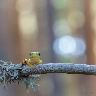 Фото Лягушка на ветке