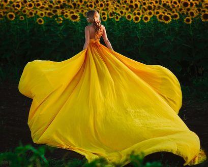 Фото Девушка в длинном желтом платье стоит у подсолнухов, фотограф Светлана Беляева