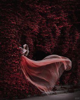 Фото Девушка в длинном розовом платье стоит у вьющегося дикого винограда, фотограф Светлана Беляева