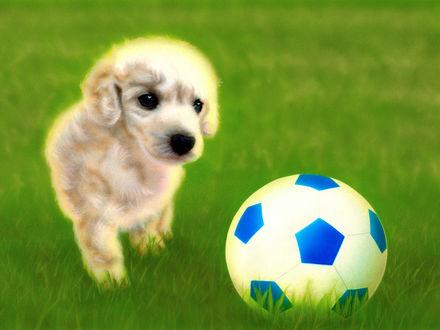 Фото Щенок смотрит на футбольный мяч
