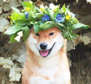 Фото Шиба-ину в венке из цветов и листьев