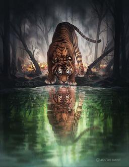 Фото Тигр лакает воду и его отражение в ней, by JoJoesArt