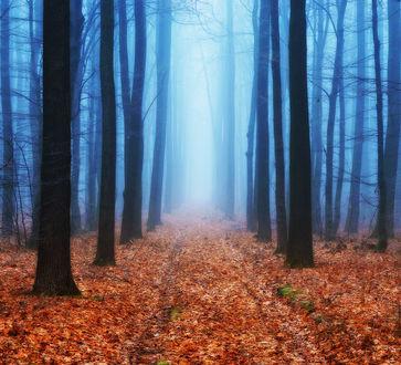 Фото Таинственный осенний лес, Фотограф Нестерчук Сергей