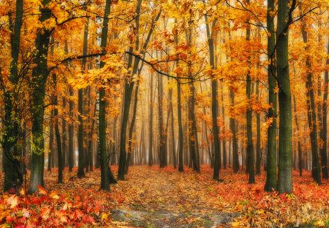 Фото Туманный осенний лес, Фотограф Нестерчук Сергей