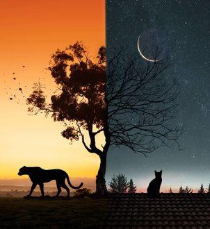 Фото Леопард на фоне неба на закате и кошка на крыше дома у дерева под ночным небом, by skip_closer