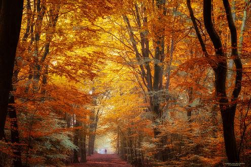 Фото Человек на дороге усыпанной осенними листьями, фотограф Herman van den Berge
